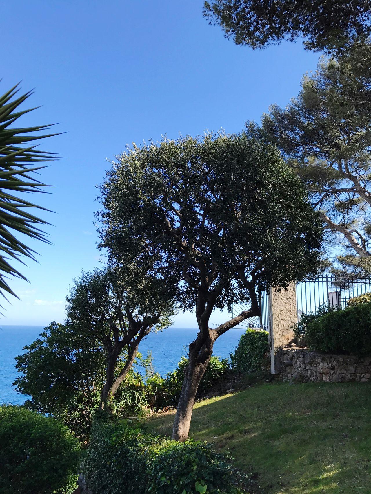 Tree Nature No People Day Beauty In Nature French Riviera Monte Carlo Monaco Monaco