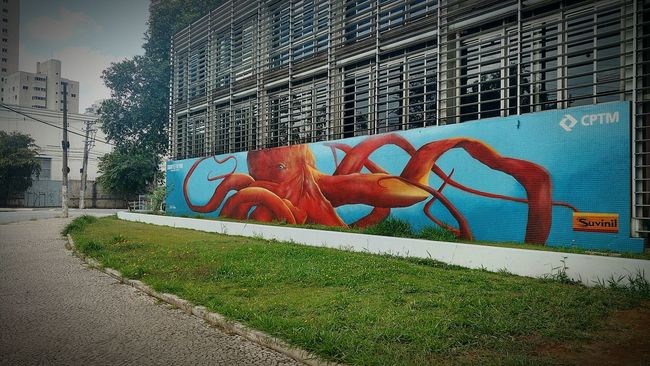 Architecture Built Structure Building Exterior Graffiti Grass Art Creativity Day Multi Colored Outdoors Surface Level Sky Footpath No People Colorful Long Octopus Graffiti Graffiti Wall Graffitiart Street Art Urban Art Colorfull Sao Paulo - Brazil CPTM