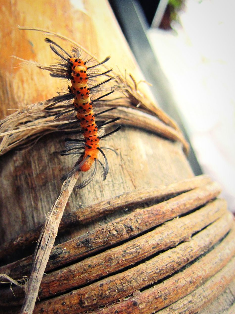 Caterpillar in Playa del Carmen, Quintana Roo, Mexico Insect One Animal Animal Themes Wood - Material Close-up No People Nature Tourism Travel Travel Destinations Spring Break 2017 Nature Photography Naturelovers Natural Beauty Playa Del Carmen Carribean Mayan Riviera