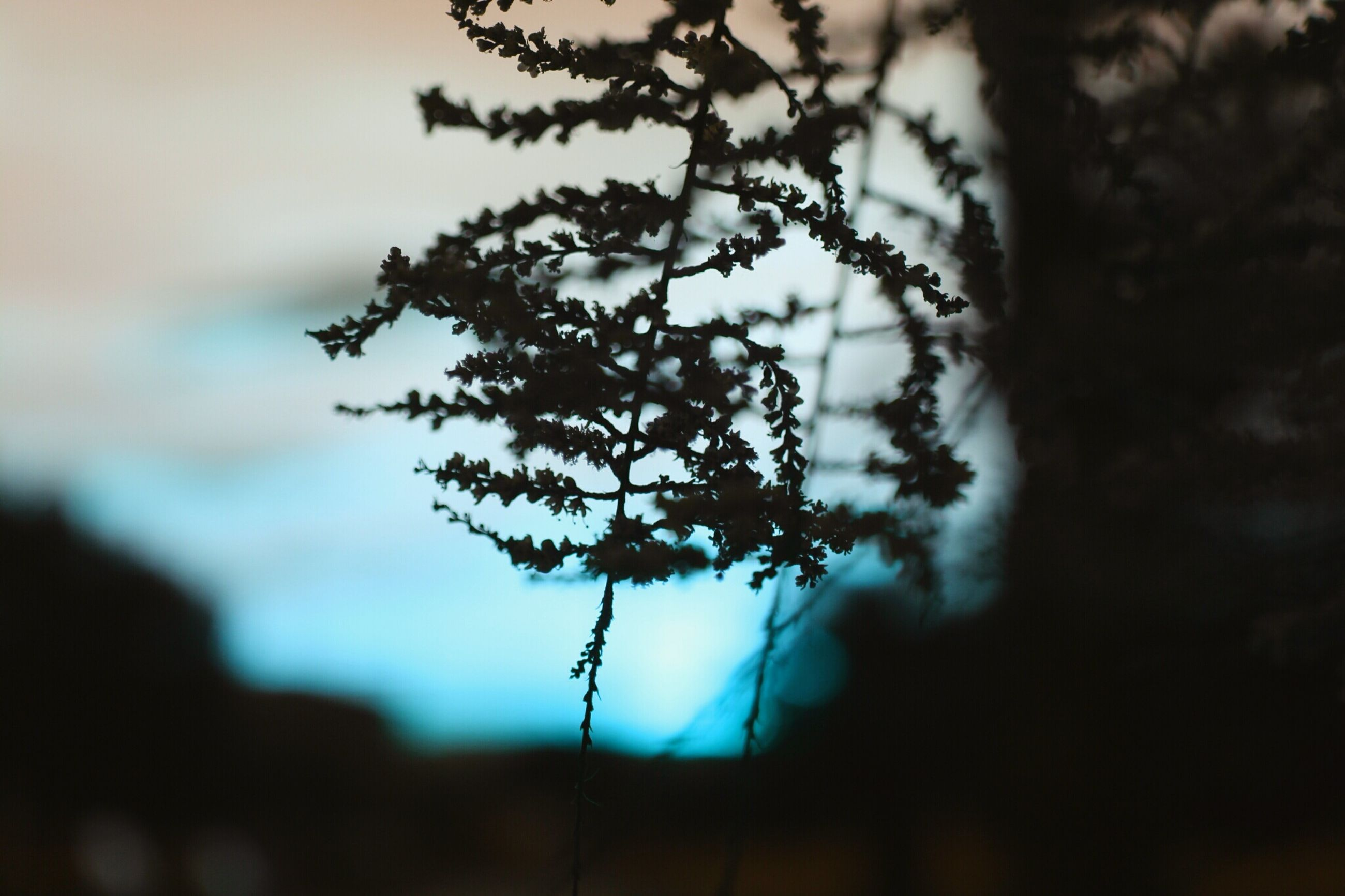 branch, focus on foreground, growth, tree, nature, close-up, silhouette, beauty in nature, sky, selective focus, tranquility, twig, plant, dusk, low angle view, stem, outdoors, fragility, no people, flower