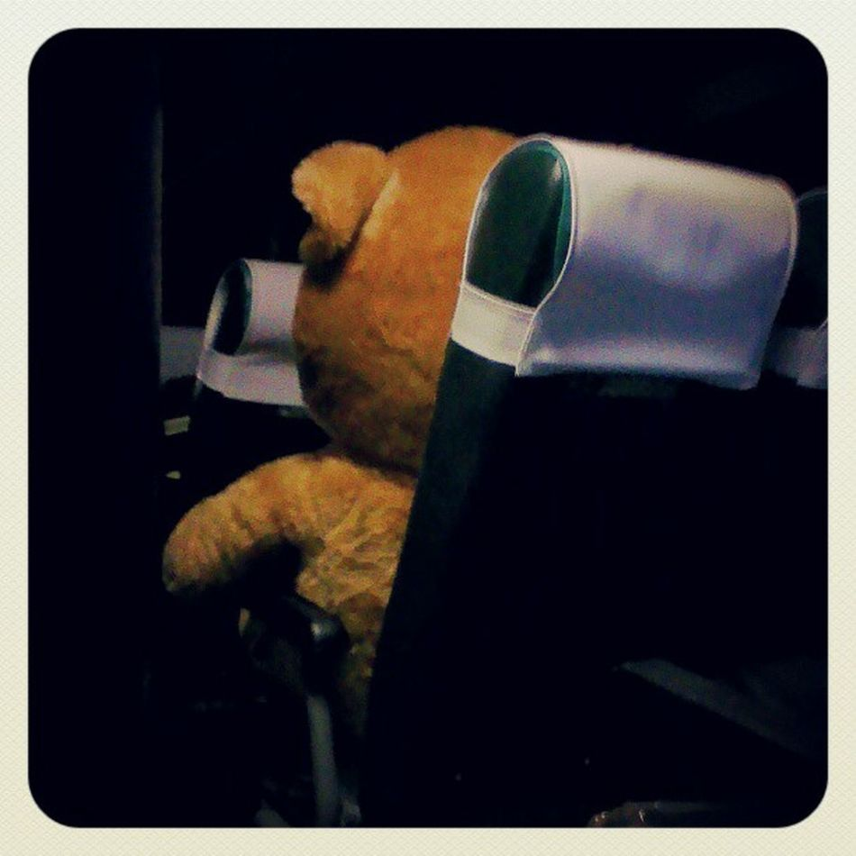 Look who's on the bus with me at 4AM! Ted Teddybear LolWhut