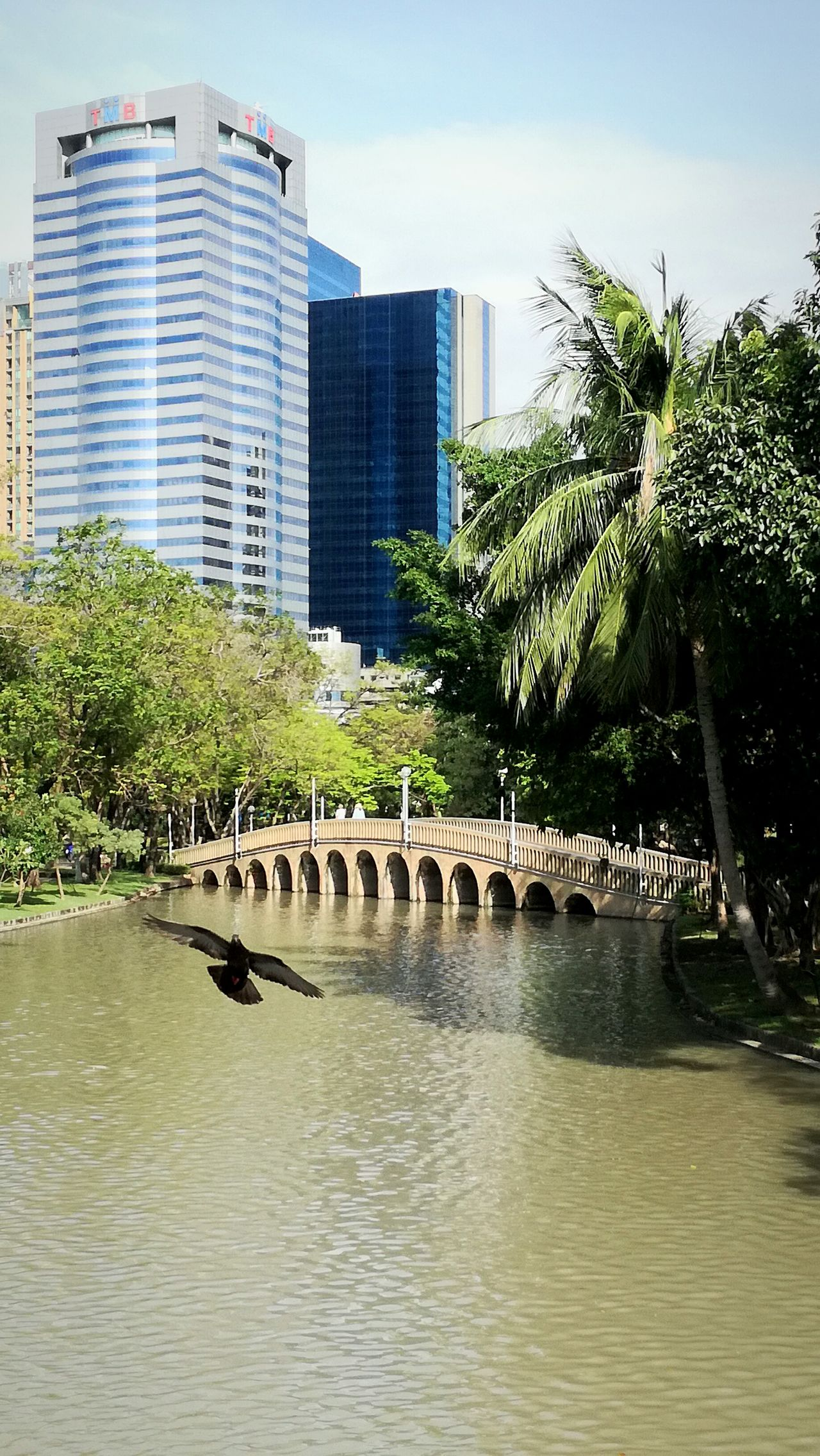 Bangkok Streetphotography EyeEmNewHere Bird Photography Bird In Flight Park View Nature Wildlife And Nature Nature In The City Palm Tree Fly High Freedom Beautiful Day