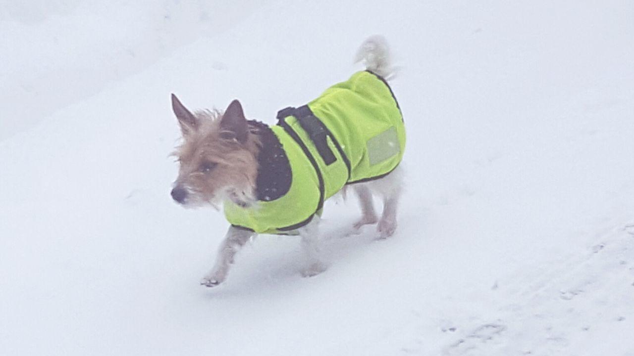 Snow Winter Dog