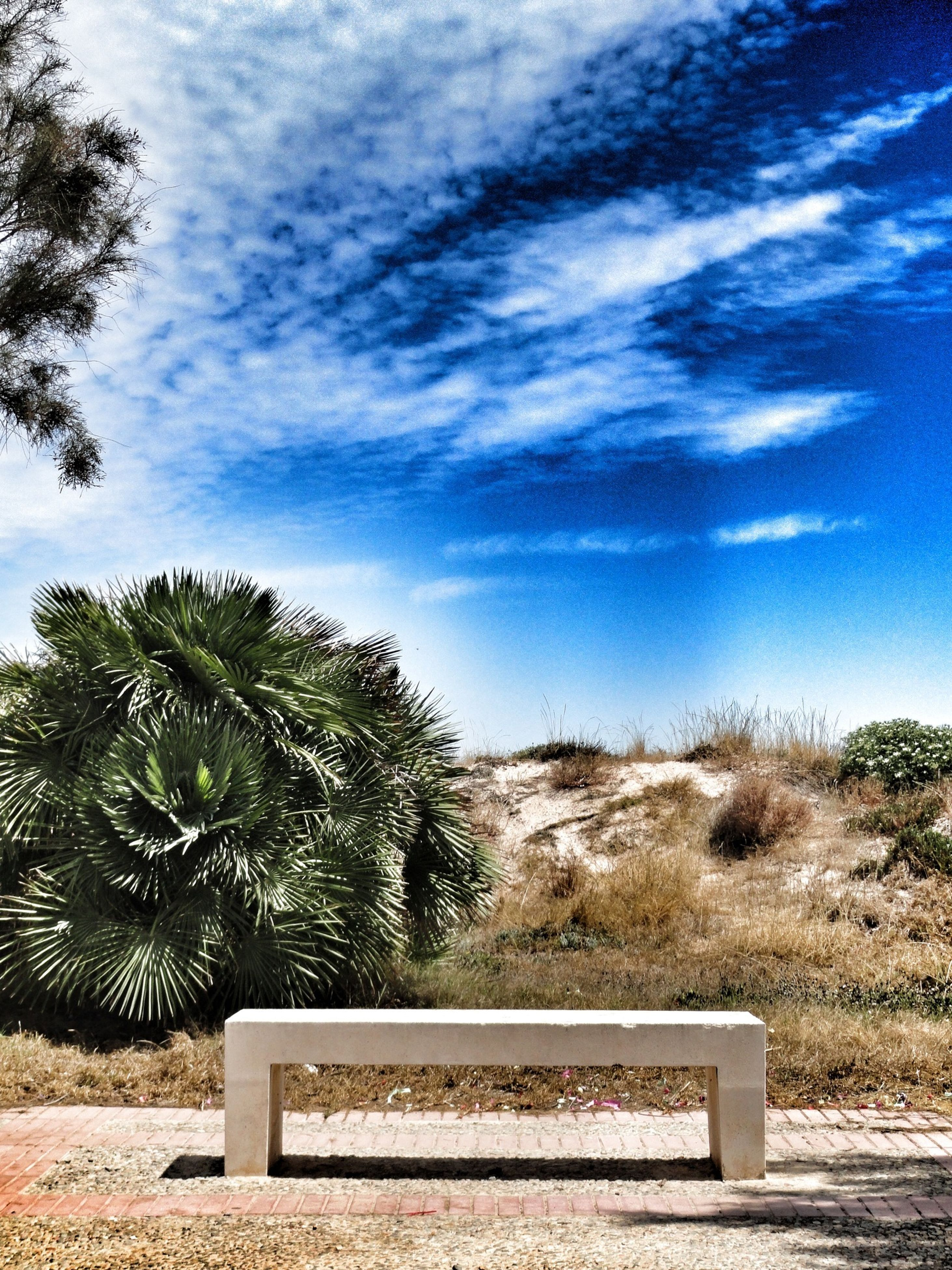tree, sky, tranquility, tranquil scene, cloud - sky, palm tree, growth, nature, cloud, landscape, scenics, text, communication, beauty in nature, field, day, plant, beach, sand, outdoors