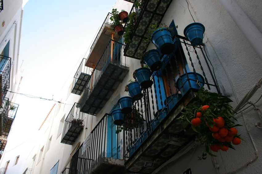 A branch of mandarins is just a decoration element, it is not growing. Balconies Flower Pots Mandarins Old Balcony Old House Old Town White And Blue White House Narrow Street Spanish Town Spanish Arquitecture Cityscape Peñíscola Sky Blue Sky Travel Destinations Travel