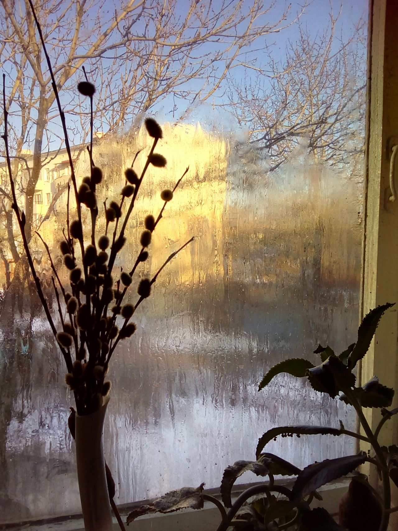 Wet window with the plants Water Window Wet Silhouette Branch Tree Sunset Sunlight Scenics Close-up Sun Plant Plants Sky Kalanchoe No People Winter