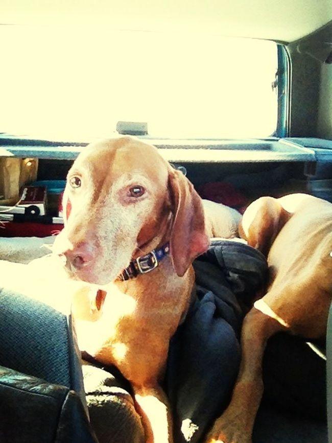 December 2013 Backseat Diaries