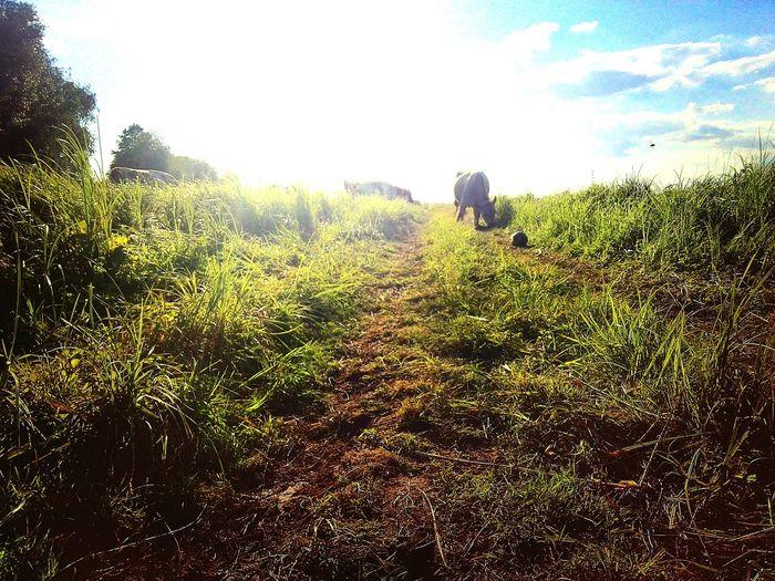 Summer Nature Village First Eyeem Photo