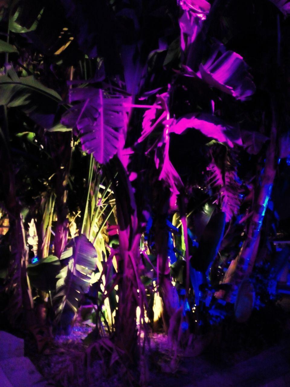 night, purple, no people, illuminated, nature, indoors, close-up, beauty in nature