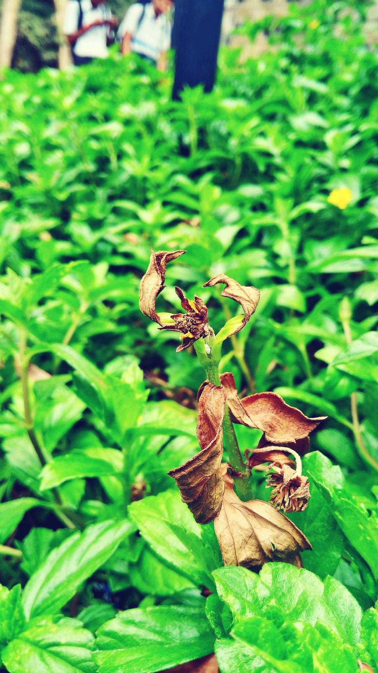 Garden Nature Plant Leaf Close-up Freshness