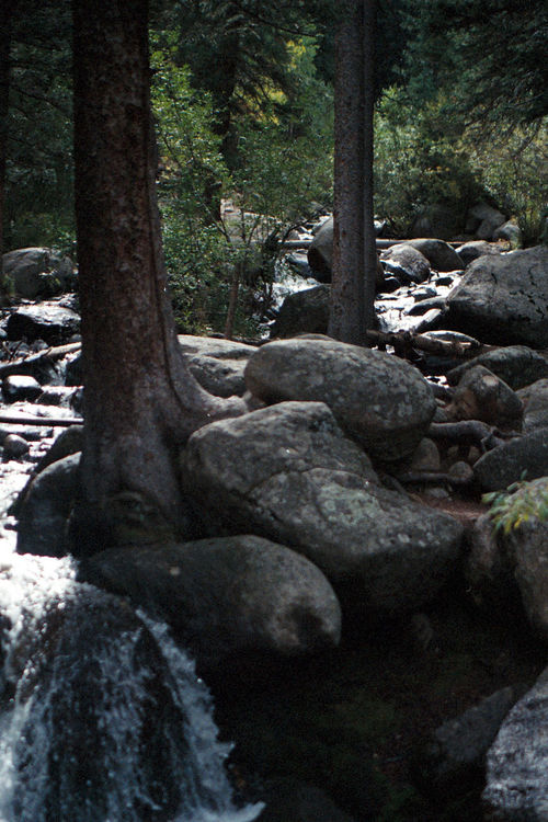 Tree Tree Trunk Nature Tranquility No People Outdoors Forest Close-up Beauty In Nature Lakescape Beauty In Nature Scenics Landscape Nature Trees And Rocks Stream And Trees Rock Stream Trees Been There.