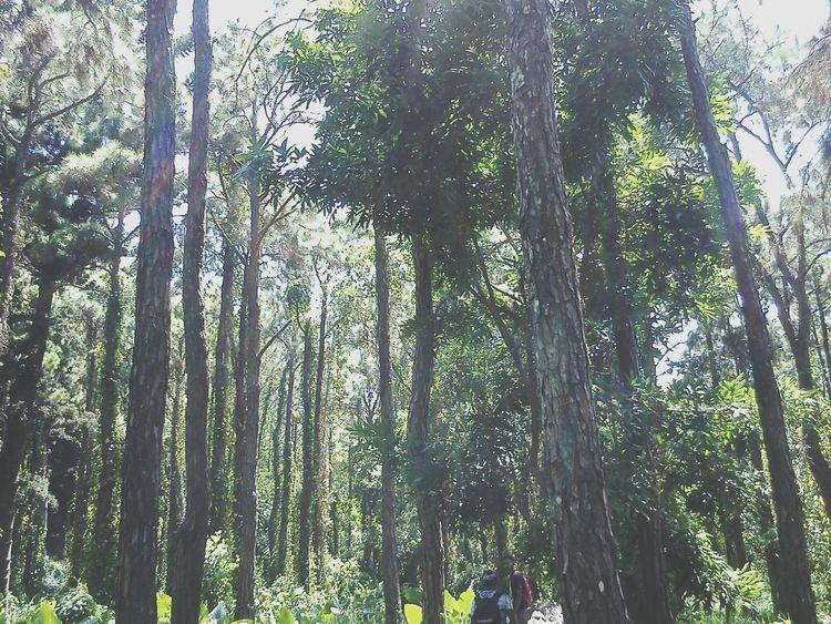 Enjoying Life Nature Trees Green World Quality Time