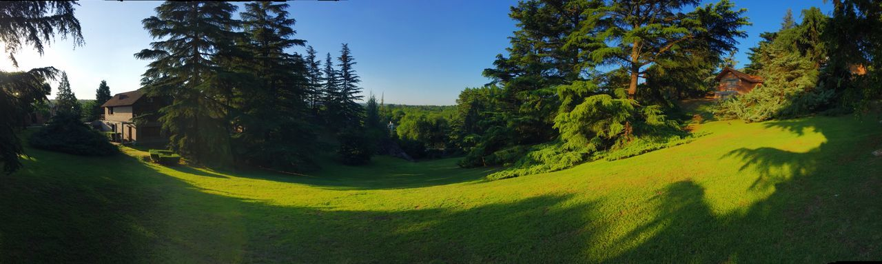 Panorámica Panoramic Panoramic Photography Panoramic View Tree Green Color Nature Growth Grass Outdoors Tranquility No People Tranquil Scene Landscape Beauty In Nature Scenics Clear Sky Day Sky Green - Golf Course Golf Course