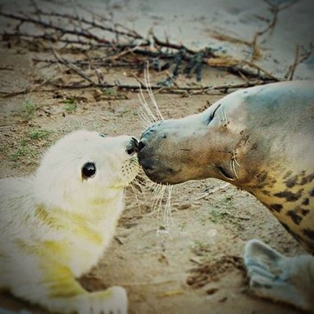 Mum and baby Sealife Wild Animals Nature Life Is A Beach Sand Sea Sealove Seals Seal