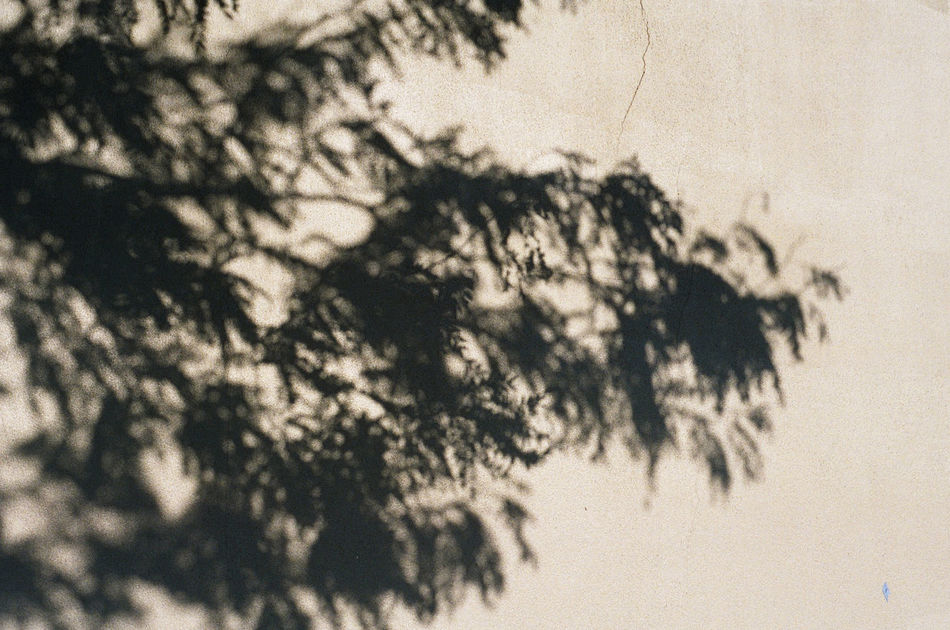 Growth Nature Optical Illusions Relaxation Scenics Shadow Shadowplay Shadows & Lights Tranquil Scene Tranquility Tree