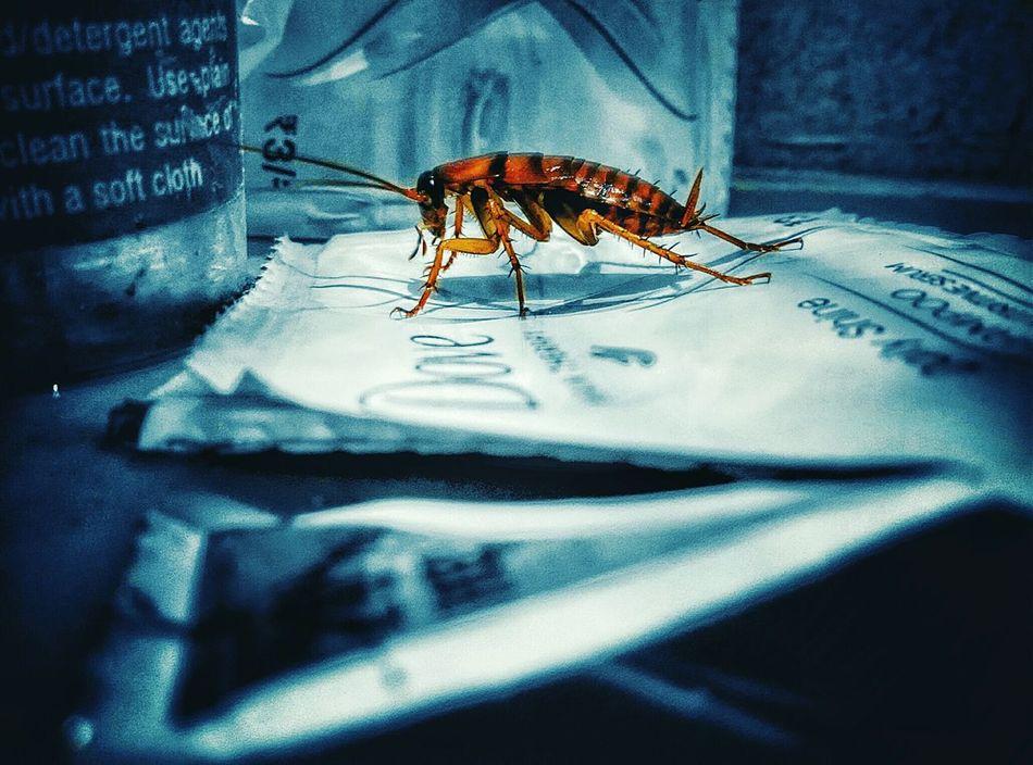Beautiful stock photos of cockroach, Animal Antenna, Animal Markings, Animal Themes, Animals In The Wild