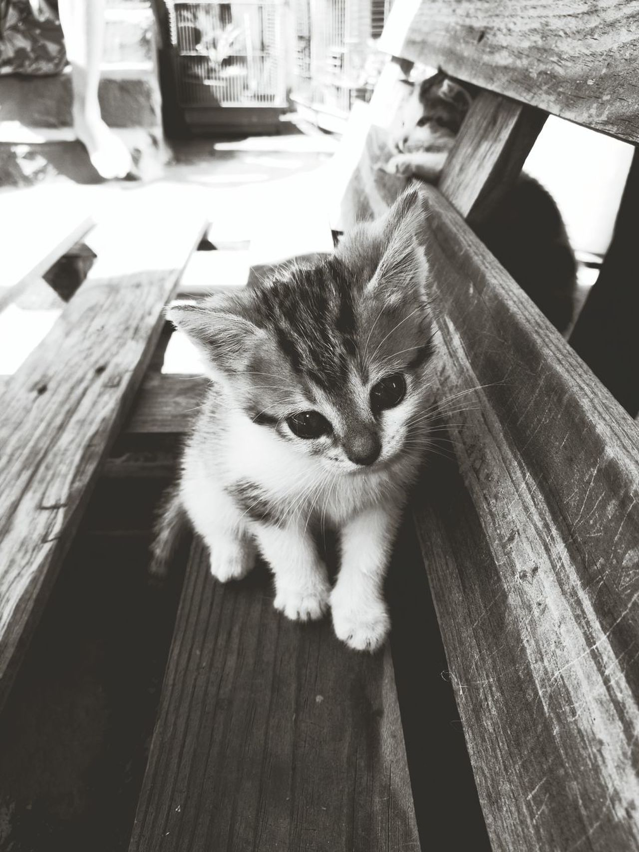 Pets One Animal Domestic Animals Domestic Cat Day No People Indoors  Animal Themes Close-up Cats Of EyeEm Greyscale Playing Discovering Babycat