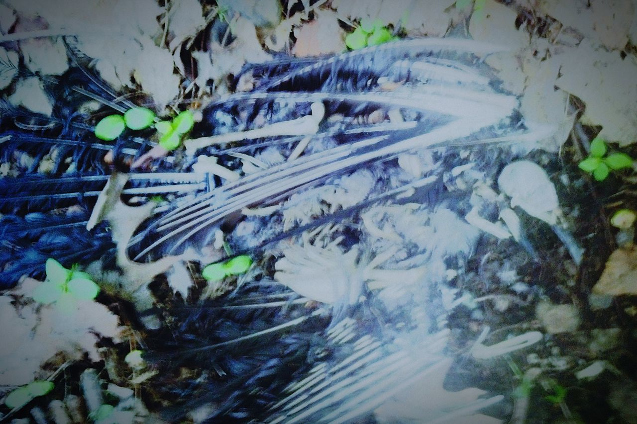 No People Day Close-up Outdoors Nature Nature MotherNatureFlippintheBird Pheonix  Death Ending Beginnings Birth