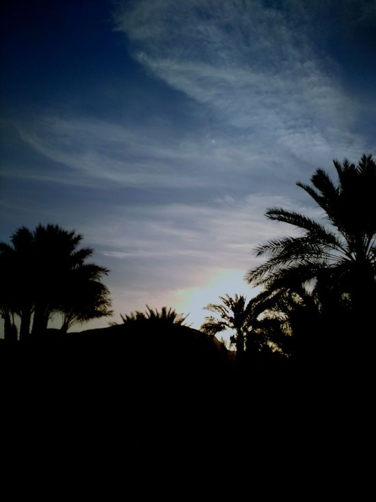 Tree Sunset Sky Nature No People Day Outdoors Beautiful Capture The Moment Saudi Arabia Photo Photography Nature Beauty In Nature What Does Beauty Look Like ? Desert Check This Out Life Everywhere Beautiful Nature Saudi_arabia GoingOut Riyadh