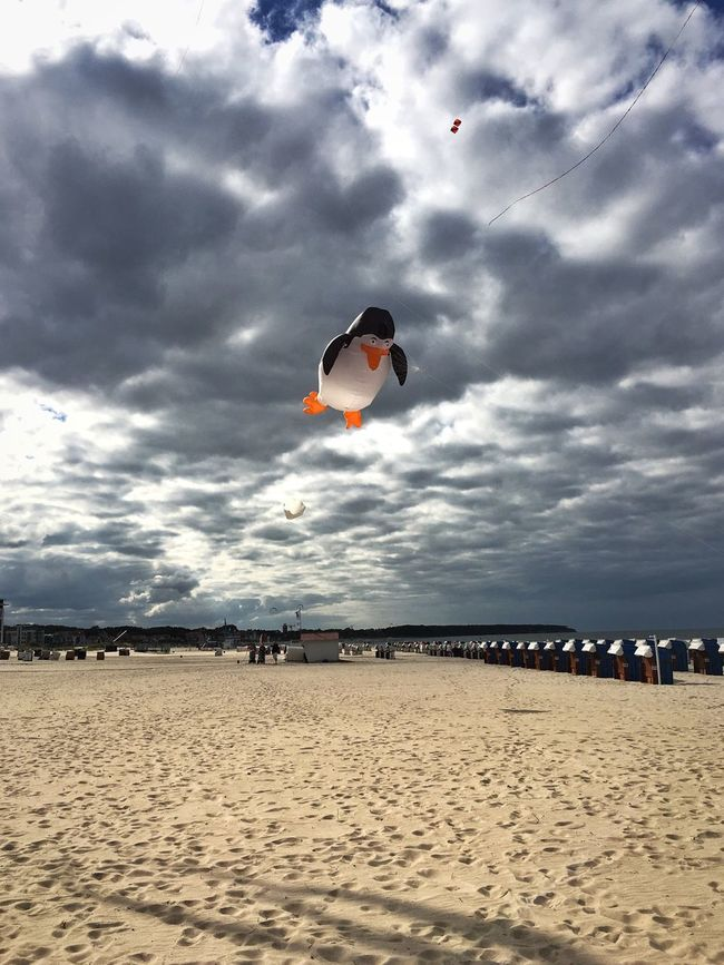 Kite Flying Animals Flying Penguin Penguin Penguin ♡ PenguinLove Skyporn Clouds And Sky Warnemünde Beach Autumn Sand Tranquil Scene Tranquility Cloud - Sky Sky Vacations Incidental People Cloud Tourism People And Places My Favorite Place Nature Flying