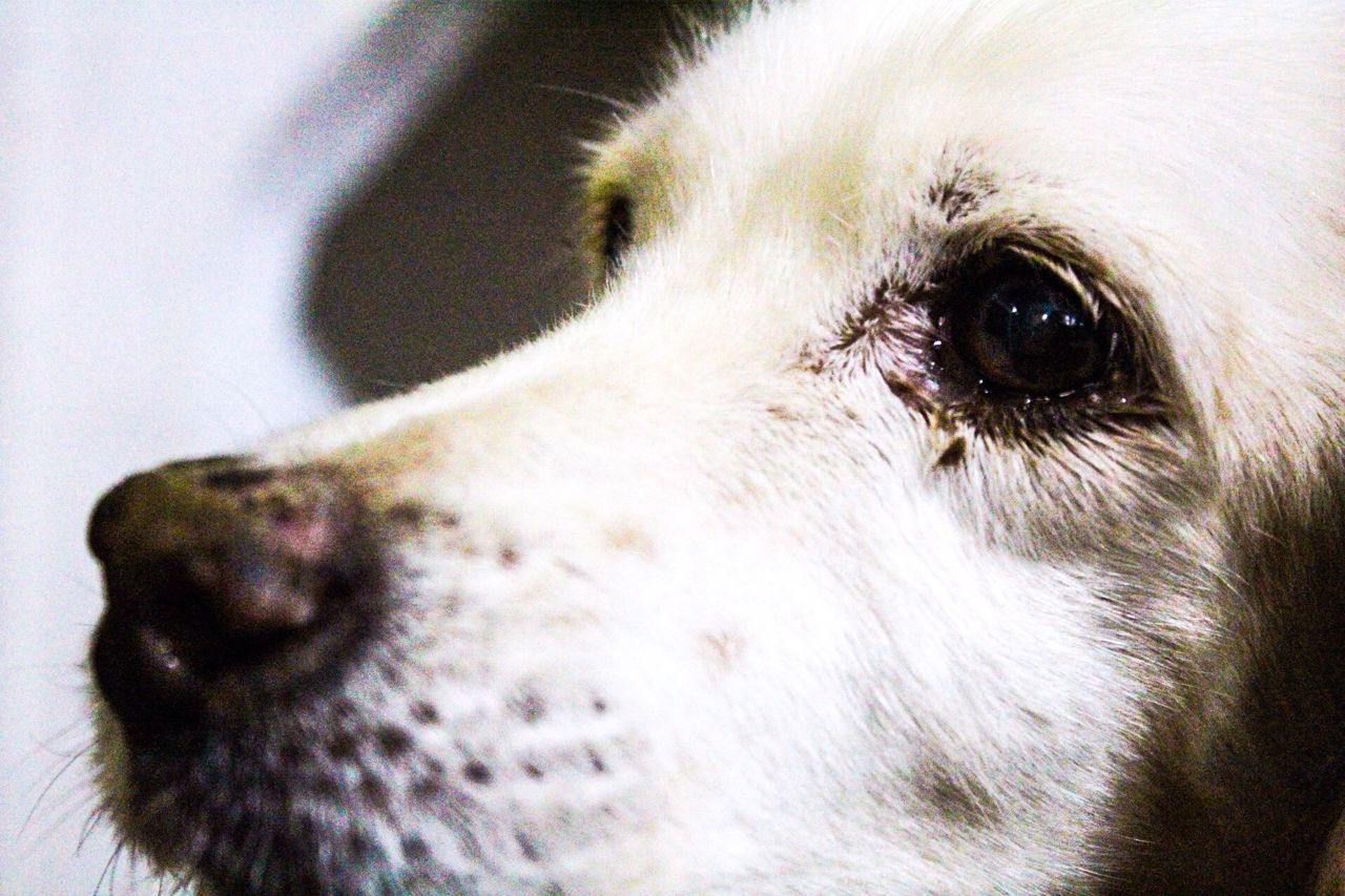 Lo sguardo intenso di un cane One Animal Pets Animal Themes Dog Domestic Animals Animal Body Part Animal Head  Photooftheday Goprooftheday GoPrography Photography Photographer