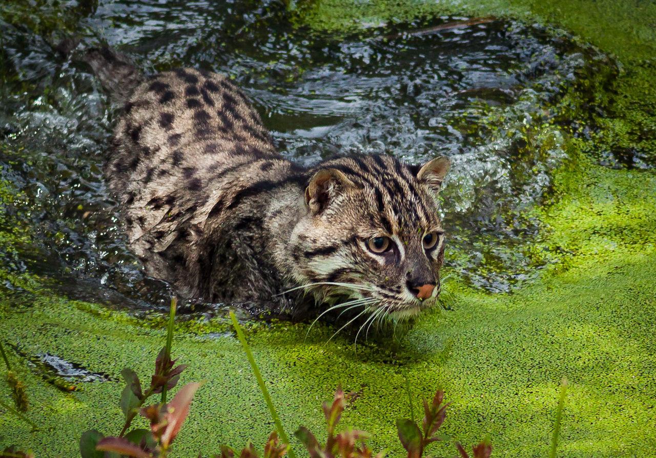 Beautiful stock photos of löwe, Alertness, Algae, Animal Themes, Animal Wildlife