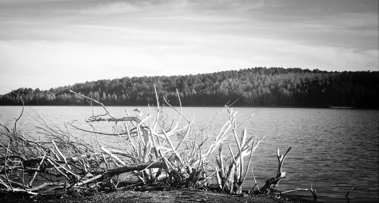 tranquility, nature, water, tranquil scene, lake, beauty in nature, scenics, outdoors, no people, tree, day, grass, sky, growth, landscape
