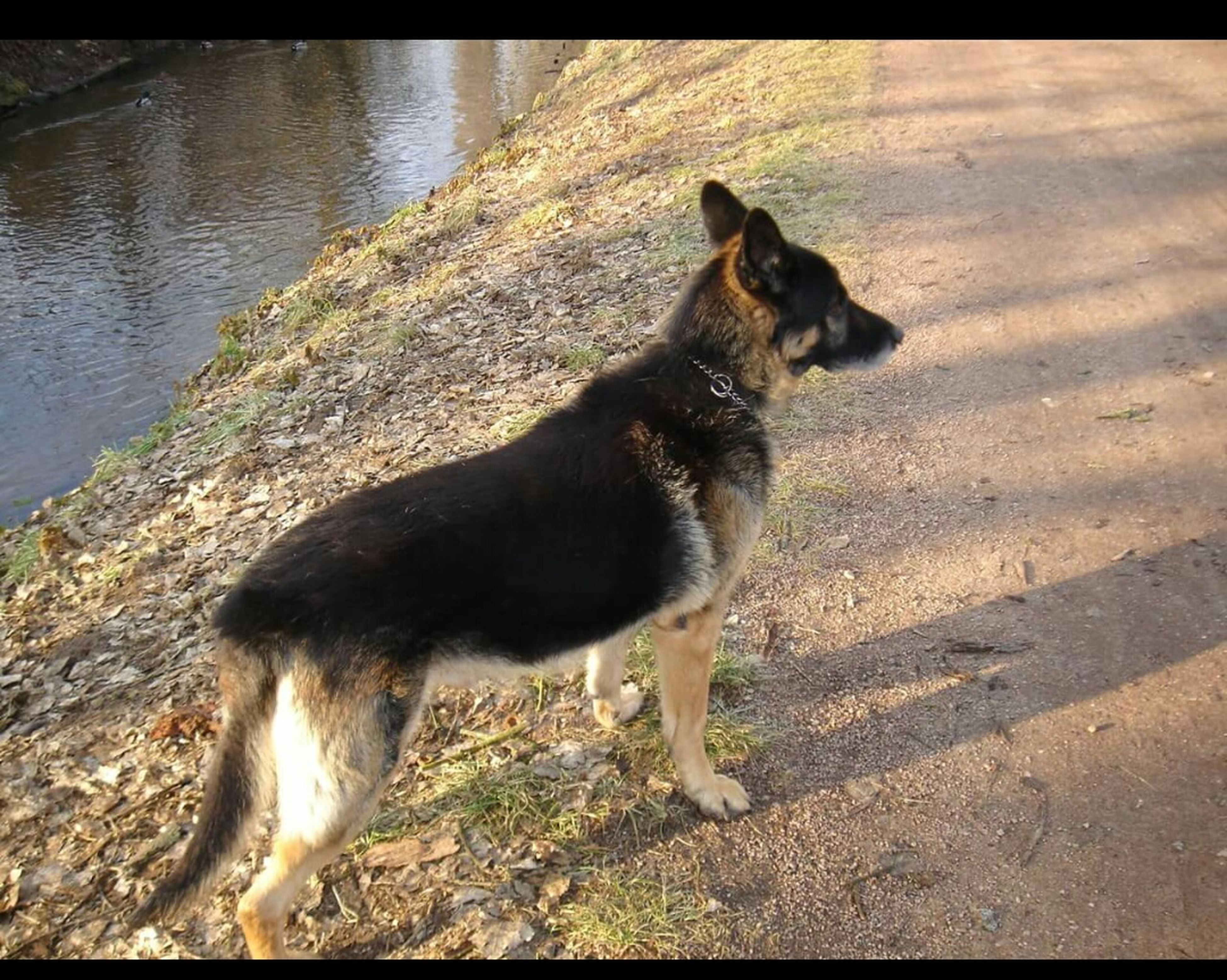 pets, domestic animals, animal themes, one animal, dog, mammal, high angle view, sunlight, water, shadow, full length, outdoors, standing, black color, sitting, day, pet collar, street, looking away, no people
