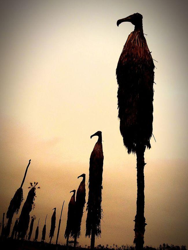 Guardianes del pantano First Eyeem Photo