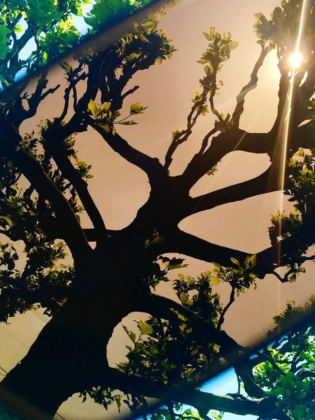 Silhouette Tree Summer Through My Sunglasses