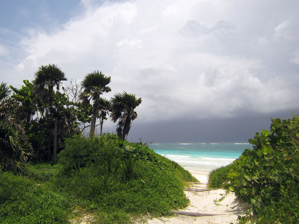 Storm is coming acroos the sea - carribean beach - Tulum - Quintana Roo - Mexico Beach Beauty In Nature Carribean Carribean Sea Cloud - Sky Horizon Over Water Nature No People Outdoors Palm Tree Scenics Sea Stormy Sky Tree Water