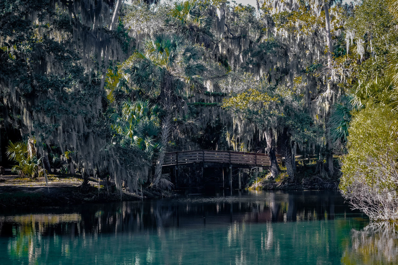 This is my first Gemini Springs reflection in Florida. The Spanish Moss hanging from the trees, the foot bridge, the incredible color of the water has captivated me into this photo. Day EyeEm Best Shots Florida Forest Ladyphotographerofthemonth Lake Lake View Lush Foliage Nature Outdoors Pattern, Texture, Shape And Form Picturing Individuality Reflection Reflection River Scenics Showcase: November Southern Spanish Moss Tranquil Scene Tranquility Tree Pastel Power Water Waterfront