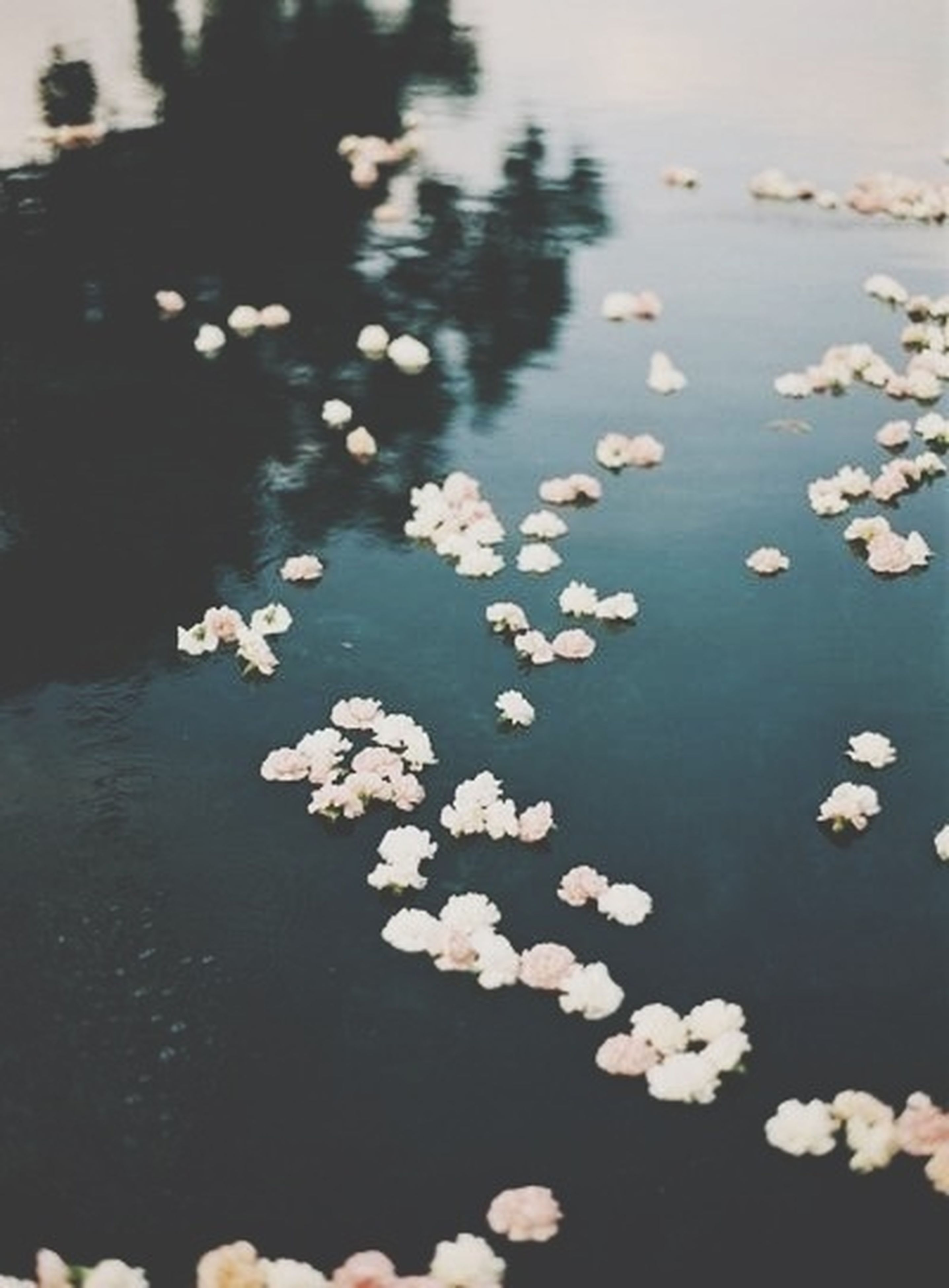 water, flower, lake, nature, beauty in nature, floating on water, high angle view, reflection, tranquility, petal, pond, waterfront, outdoors, fragility, day, leaf, growth, freshness, no people, plant