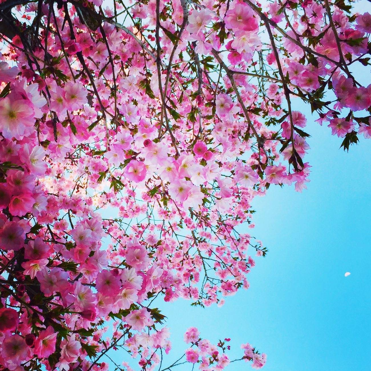 Cherry Blossoms Cute♡ Flowers Beautiful Went To..