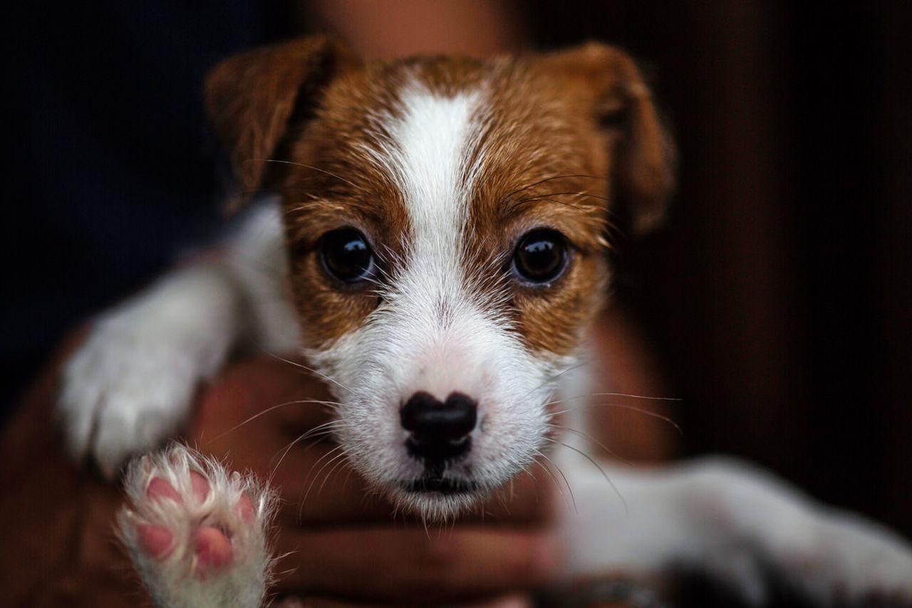 Beautiful stock photos of puppy, Animal Eye, Animal Leg, Animal Mouth, Animal Themes