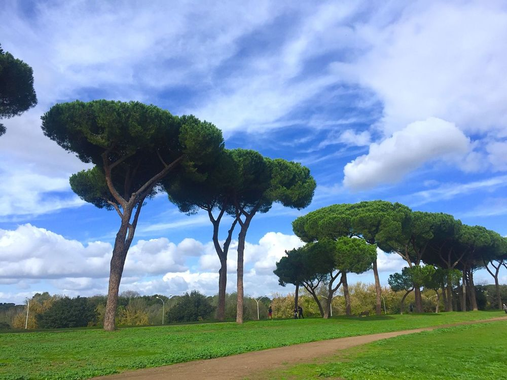 Tree Cloud - Sky Sky Green Color Nature Beauty In Nature Scenics Landscape No People Grass Day Outdoors Horizontal Villa Villa Pamphili Alley Park Sunny Day Piña Tree Tranquility Idyllic Field Blue Relaxing