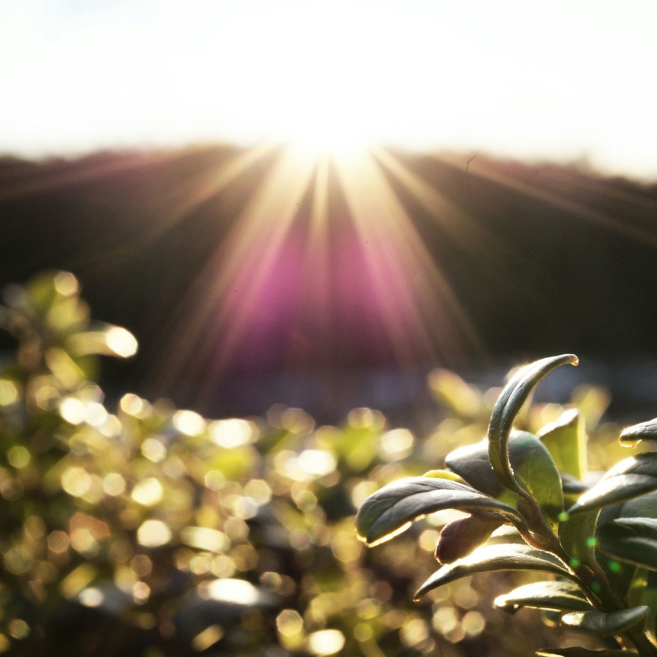 bright, lens flare, growth, sunlight, nature, sun, no people, plant, outdoors, beauty in nature, close-up, day
