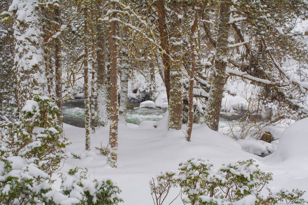 Beauty In Nature Cold Temperature River Automn Colors Snow Snowy Forest Tree France