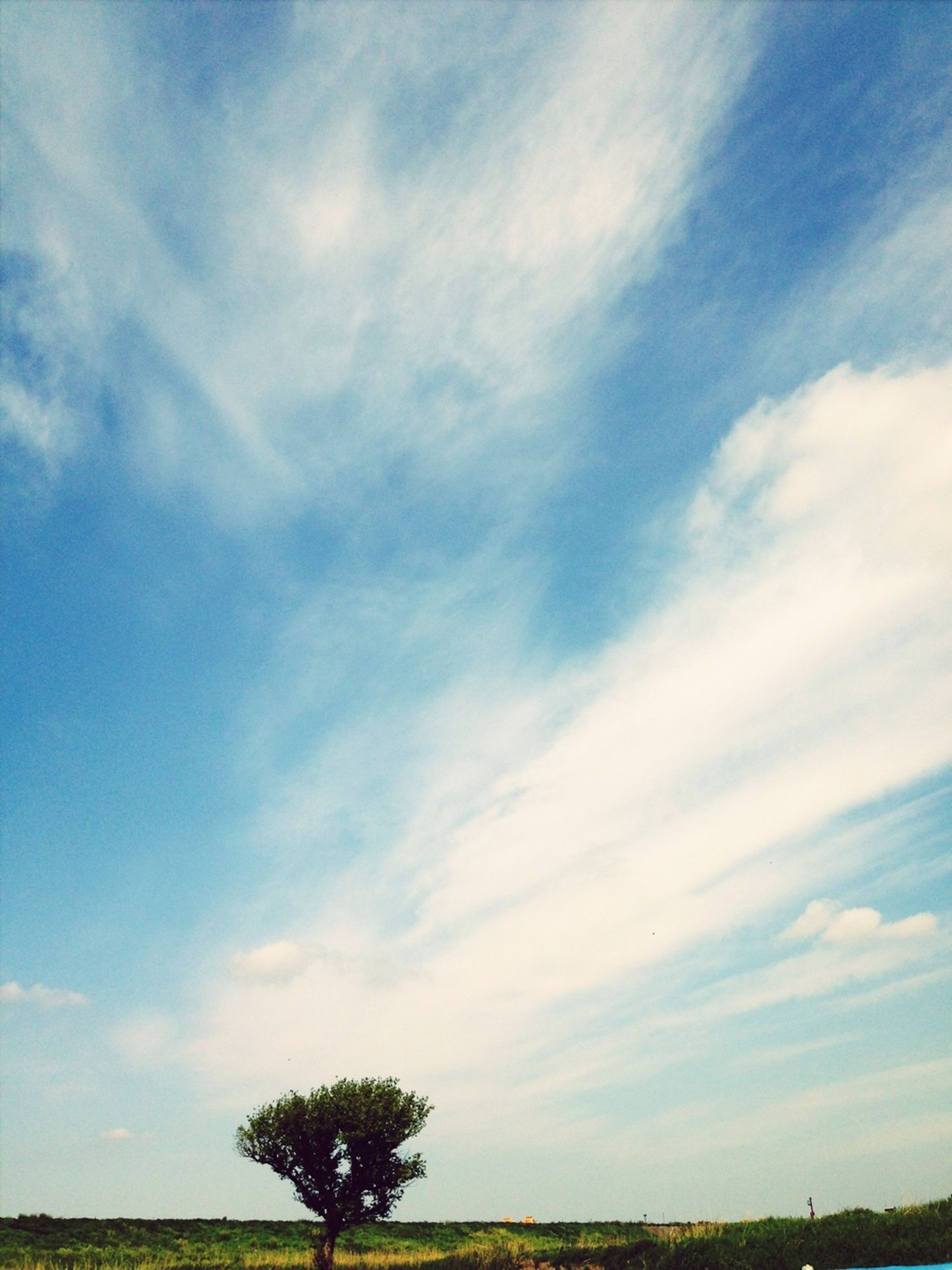 sky, tranquility, tranquil scene, tree, cloud - sky, beauty in nature, scenics, nature, cloud, field, grass, landscape, blue, growth, cloudy, idyllic, outdoors, no people, non-urban scene, low angle view