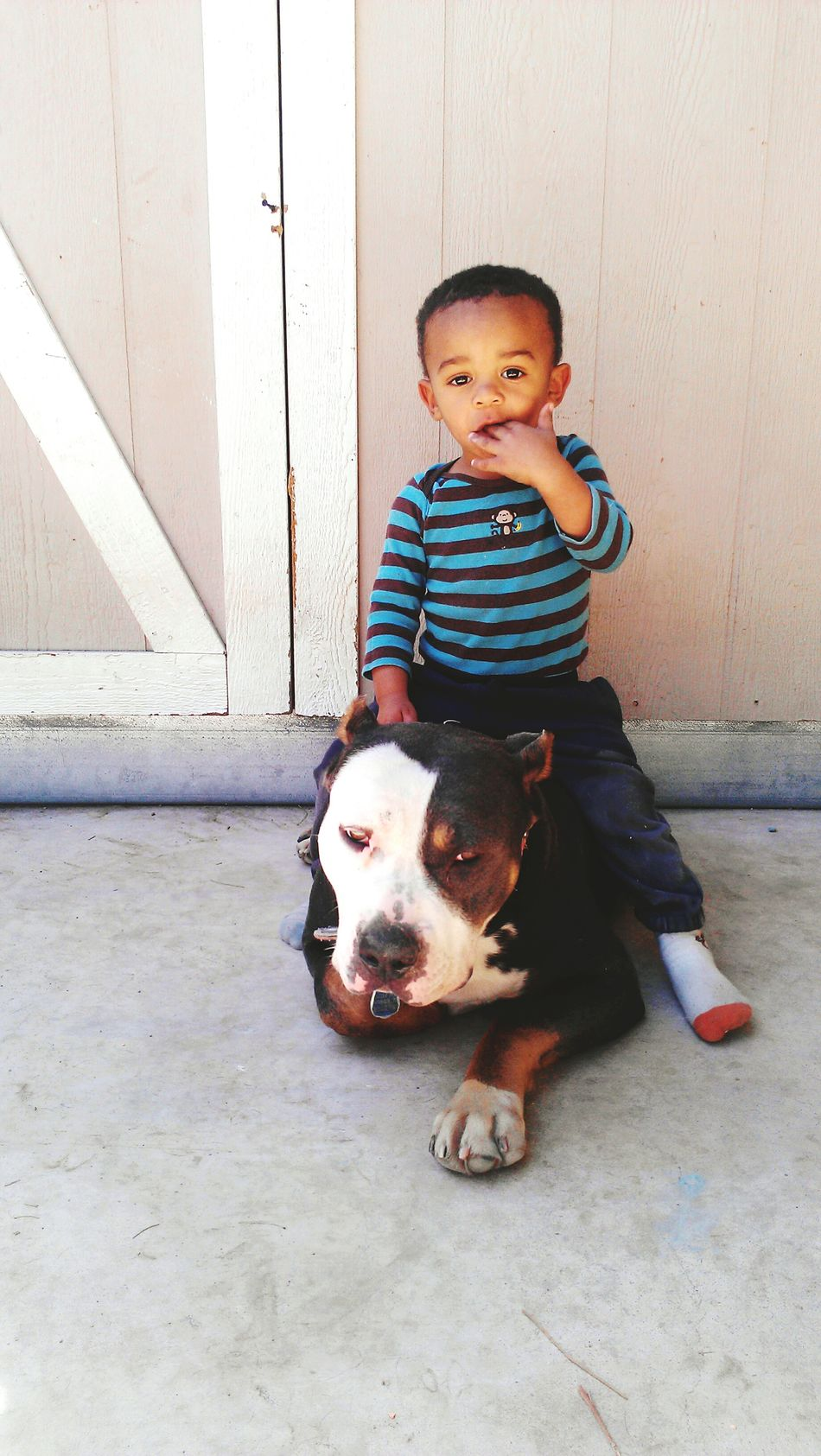 Pit Pitbull Pitbulls Pit Bull Pit Bulls Kids And Pets DogLove Bullies Two Faced Tri Colors A Boy And His Dog Boy And Dog Baby Boy Baby With Dog Animal Photography Kid Photography Child Portrait Portrait Of A Child Portrait Of A Dog Outside Outdoor Photography Sitting With My Dog Female Dog Big Dog Little Boy