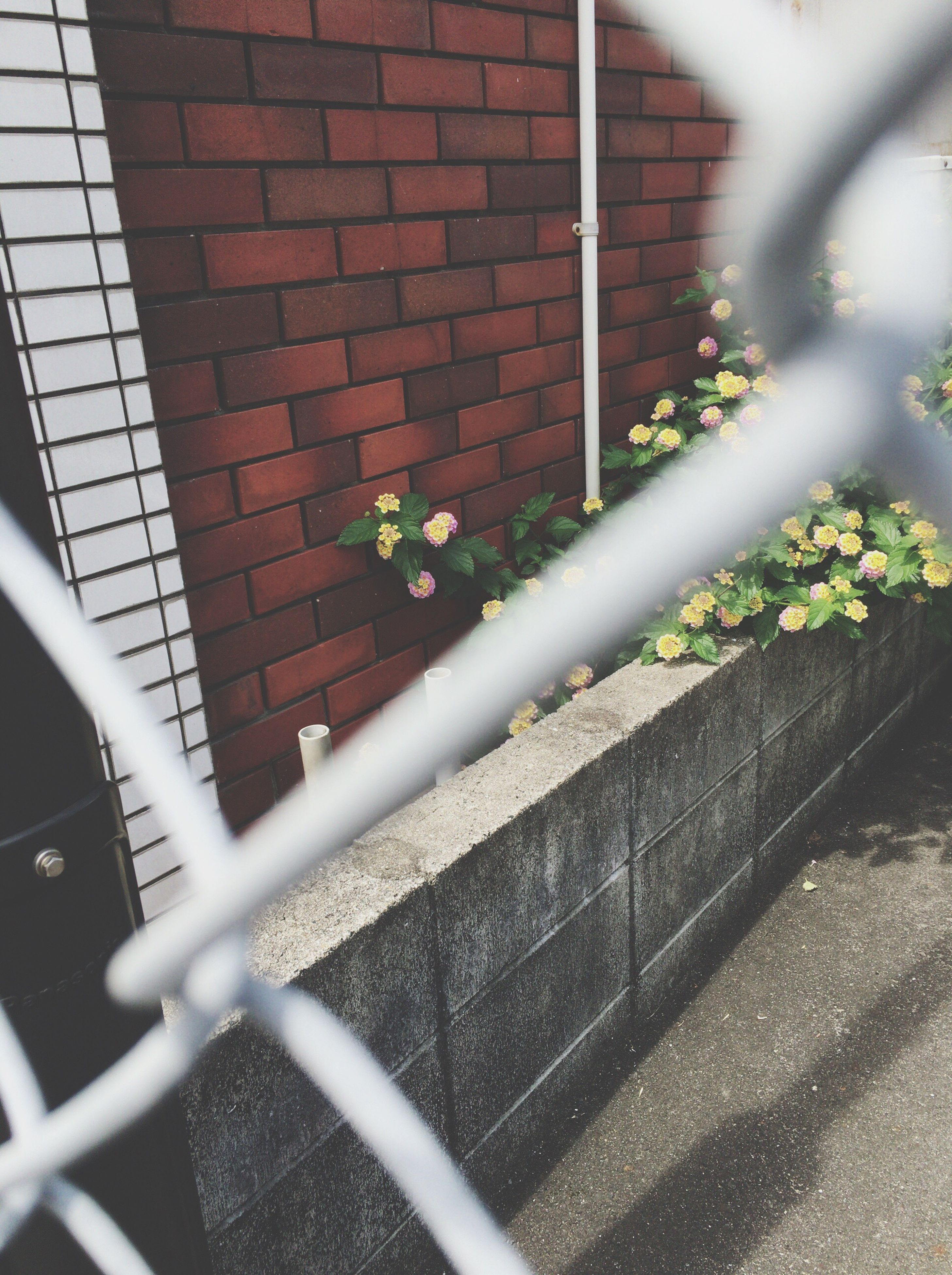 plant, built structure, flower, wall - building feature, architecture, fence, chainlink fence, protection, metal, railing, day, growth, building exterior, safety, no people, brick wall, close-up, outdoors, window, nature
