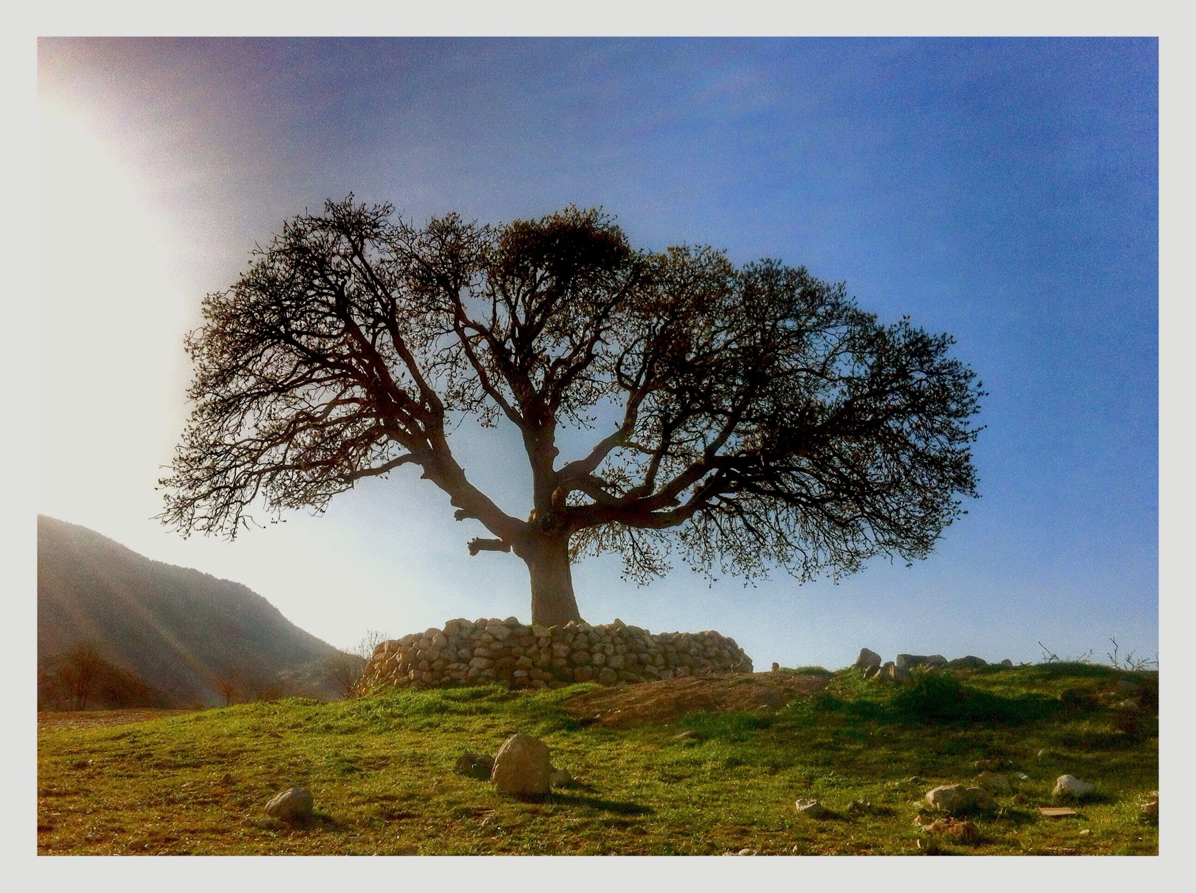 tree, transfer print, tranquility, tranquil scene, landscape, clear sky, grass, scenics, auto post production filter, nature, beauty in nature, field, bare tree, growth, sky, branch, non-urban scene, green color, blue, solitude