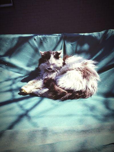 Cat Cat♡ Sunshine Lazy Day Animals EyeEm Nature Lover Enjoying Life Taking Photos