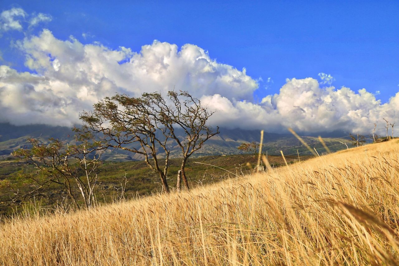 Maui Canon5Dmk3 Nature Outdoors OpenEdit Hawaii Landscape Macphun