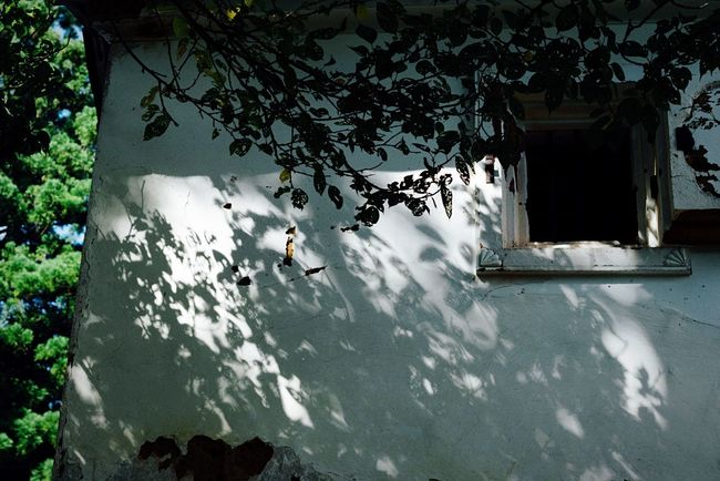 Light And Shadow White Wall White Wall With Shadows With Shadows Wall - Building Feature Building Exterior Temple Travel White And Black Green No People September September 2016 Atomosphere Traditional Japan Photography Obama Fukui