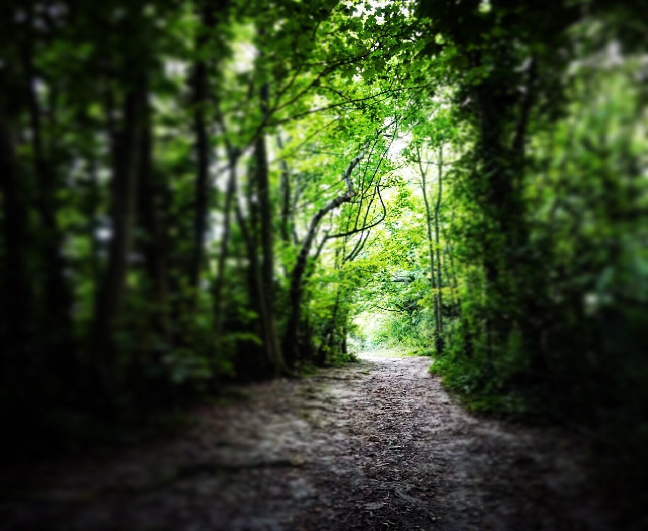 Through the woods Forest Tree The Way Forward Growth Tranquil Scene Tranquility Tree Trunk Nature WoodLand Non-urban Scene Scenics Beauty In Nature Footpath Day Diminishing Perspective Green Color Narrow Outdoors Cissburyring Worthing Sussex Downs Tiltshift