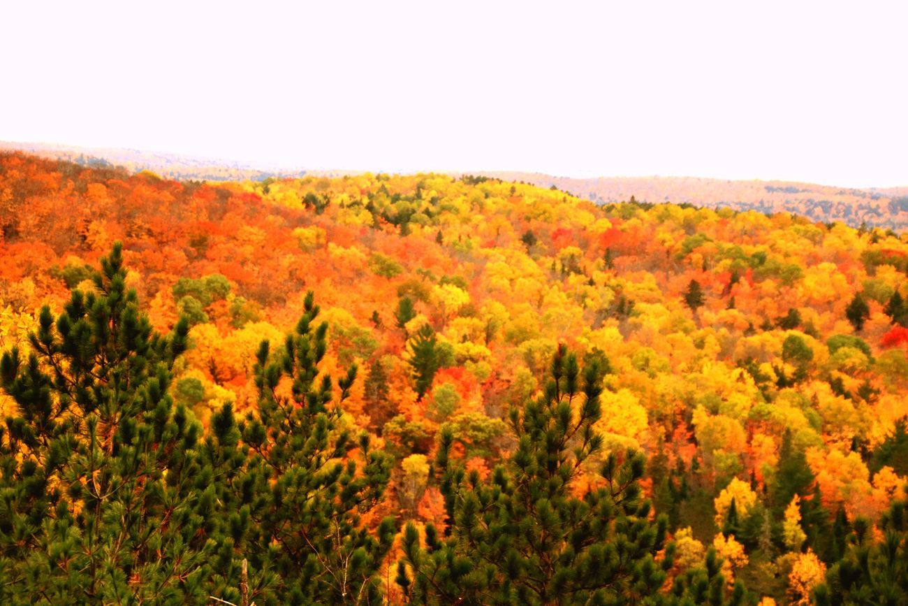 What a great view that is. Autumn Beauty In Nature Landscape Forest Nature Outdoors Non-urban Scene Mountain Yellow Multi Colored Toronto Canada Algonquinprovincialpark Tranquil Scene