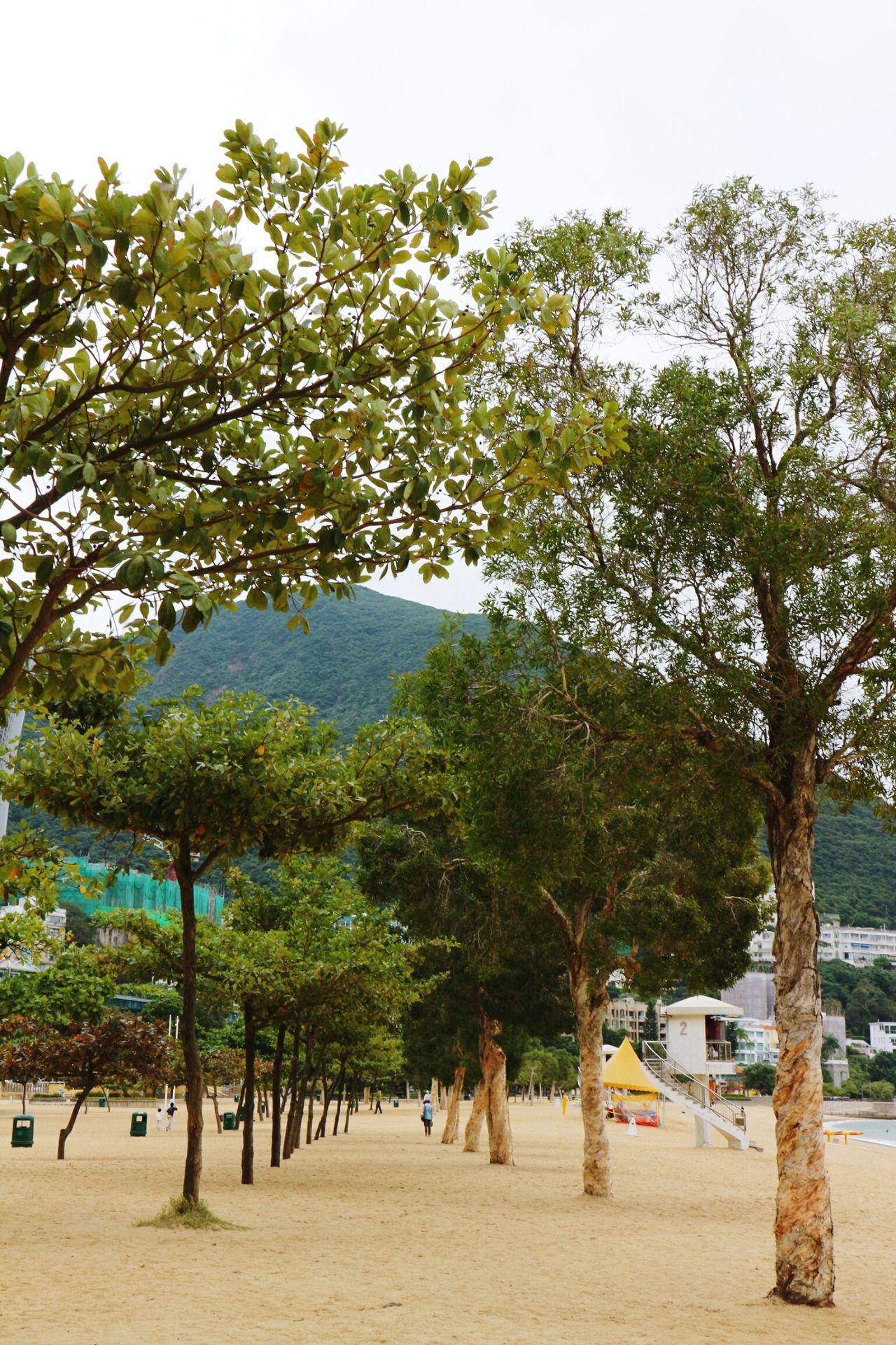 Repulse Bay Tree Nature Travel Destinations Beach Enjoy The New Normal Hongkongtrip My Year My View Hongkong Photos HongKong Hongkongphotography Exploring Style Repulse Bay Repulsebay