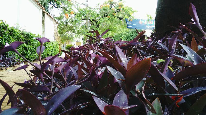 Esperandote... Hello World WeatherPro: Your Perfect Weather Shot Nature Tapiz Flower