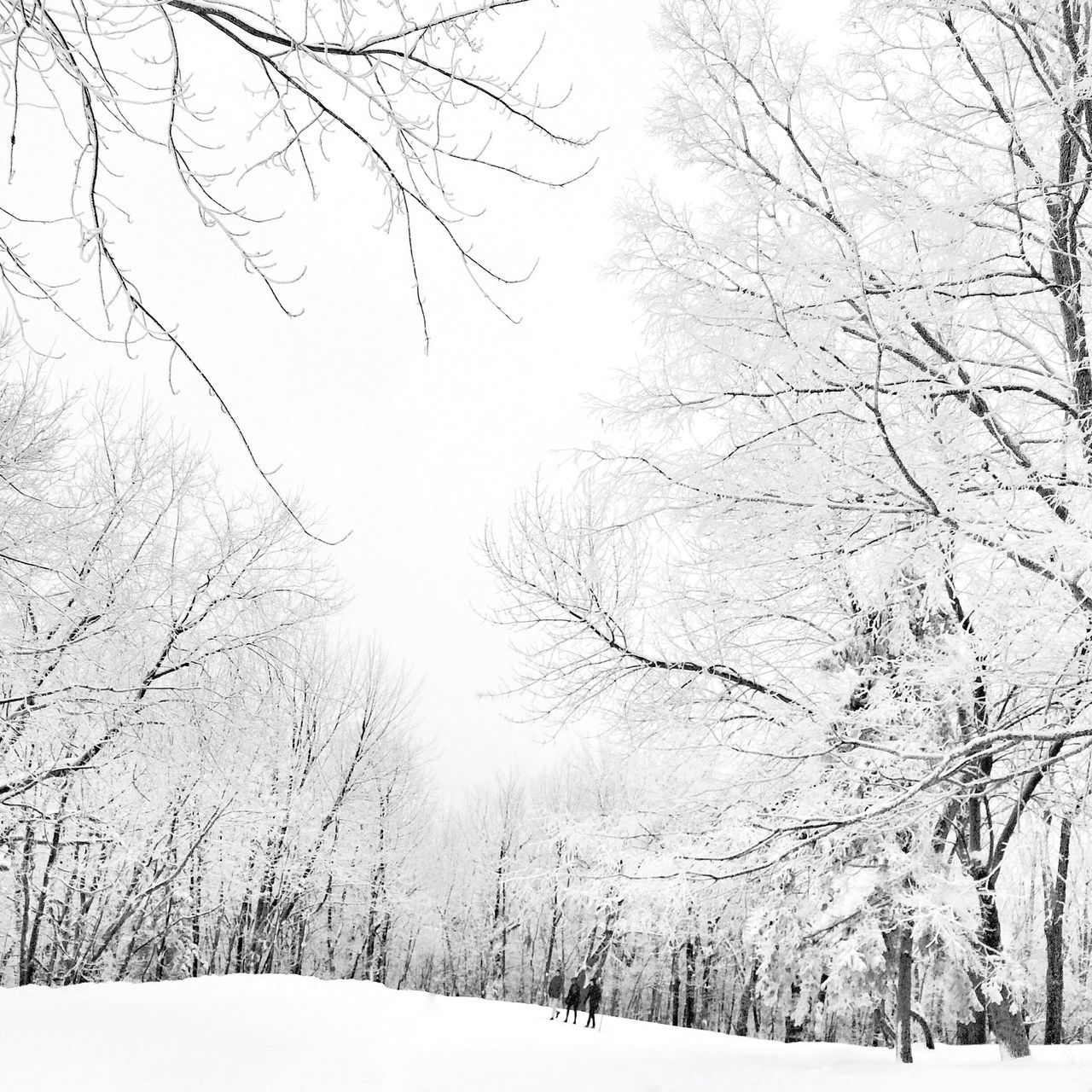 HNY 2016 EyeEm Best Shots - Black + White Snow ❄ Winter Blackandwhite It's Cold Outside